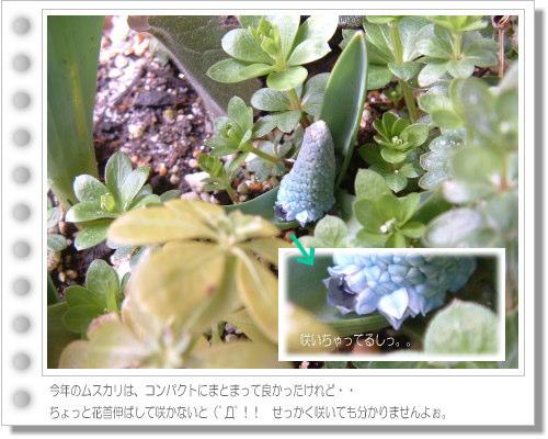 DSC738311.jpg