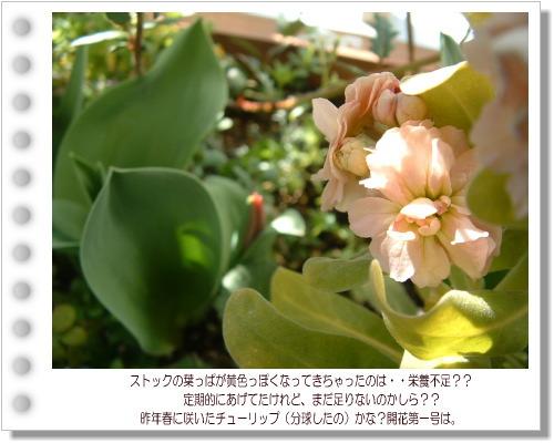 DSC743011.jpg