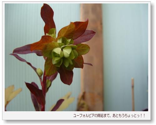 DSC743711.jpg