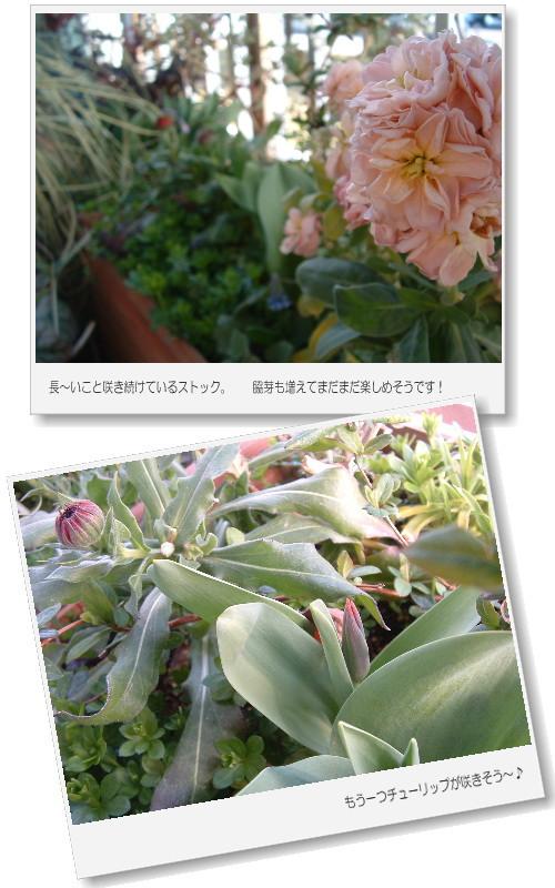 DSC745511.jpg