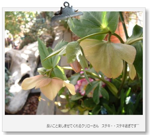DSC746311.jpg