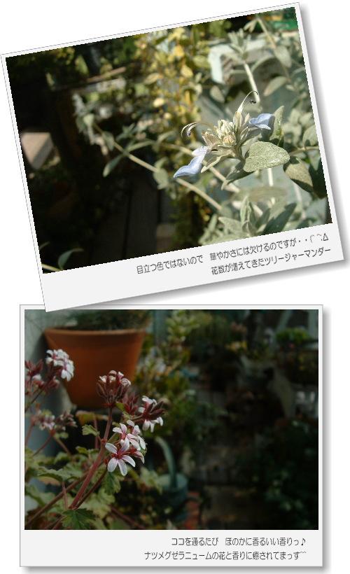 DSC748511.jpg