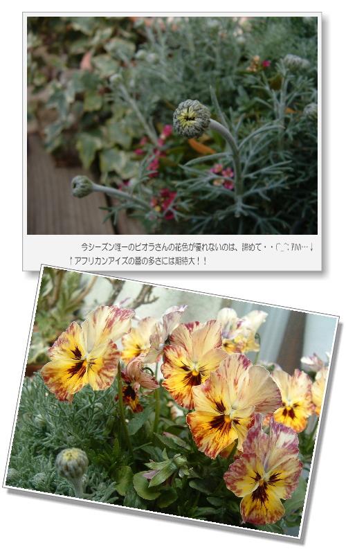 DSC749211.jpg
