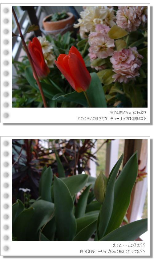 DSC749811.jpg