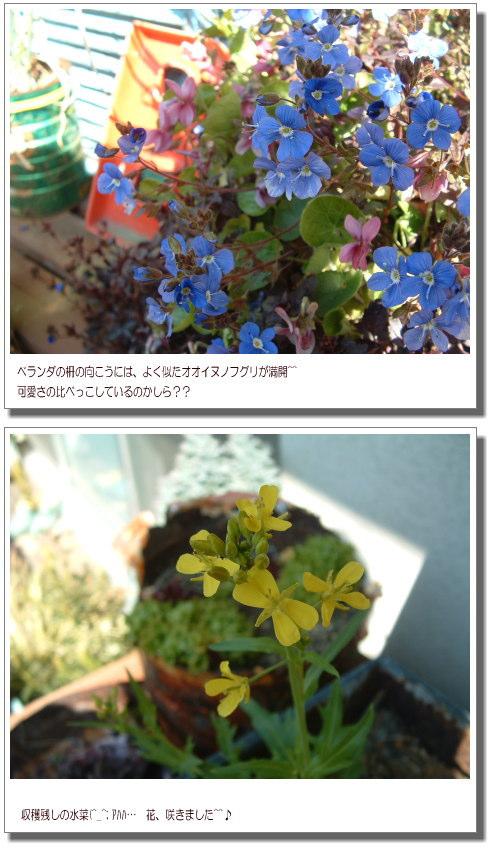 DSC751211.jpg