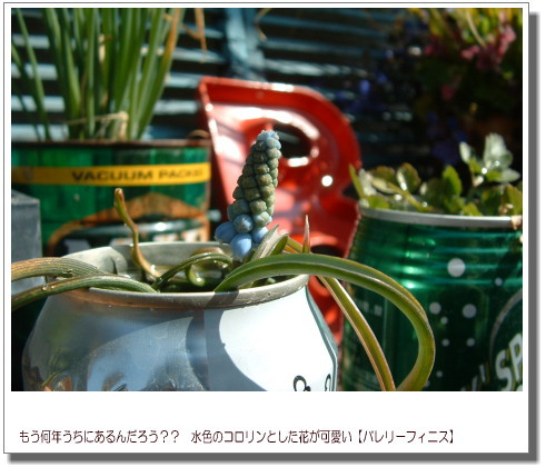 DSC751511.jpg