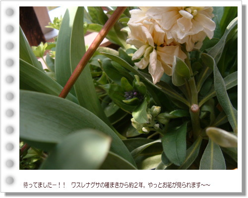 DSC753811.jpg