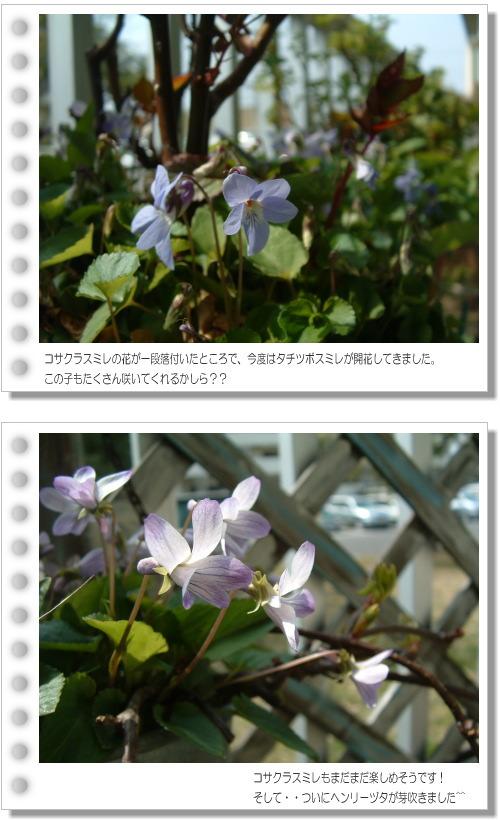 DSC754011.jpg