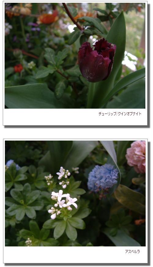 DSC759311.jpg