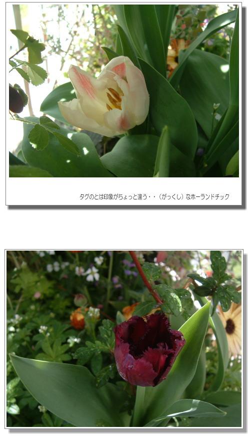 DSC759511.jpg