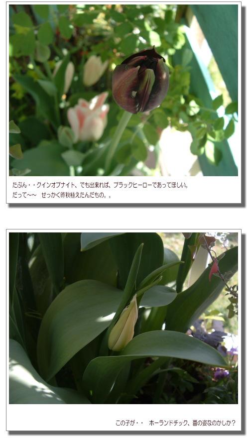 DSC763511.jpg