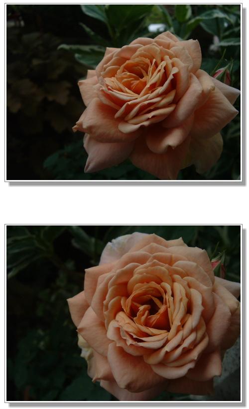 DSC793911.jpg