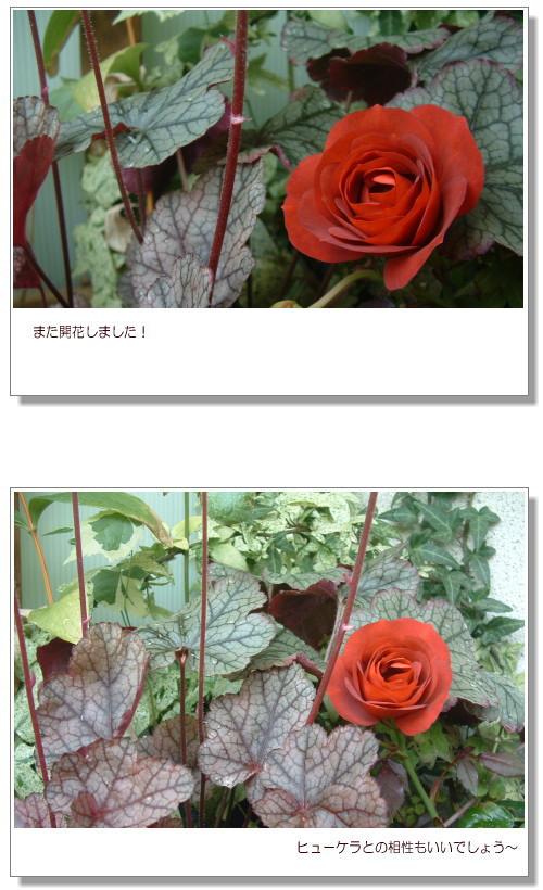 DSC824211.jpg