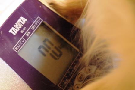 20070320232207.jpg