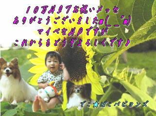 imageorei2.jpg