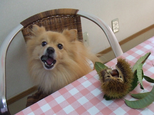 梨をもぐもぐ。。。美味しいね♪