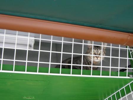 猫町カフェの猫