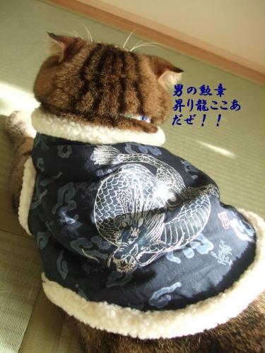のぼり龍1