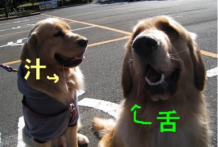 大池公園2009_html_7ba04564