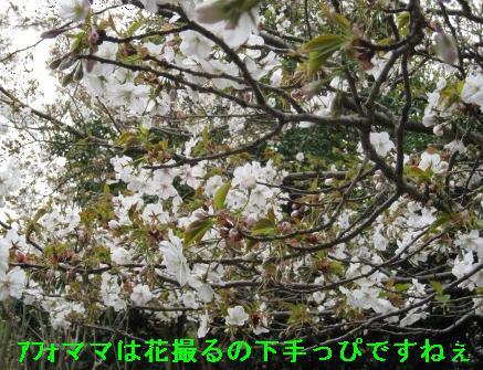 kannon_IMG_2100.jpg