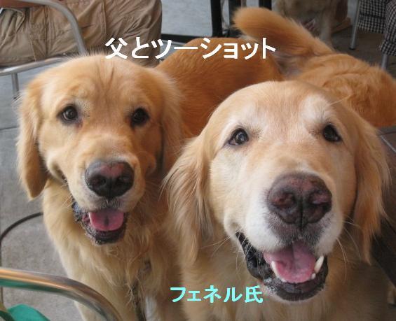 misatoIMG_2940.jpg