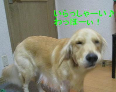 misatoIMG_2946.jpg