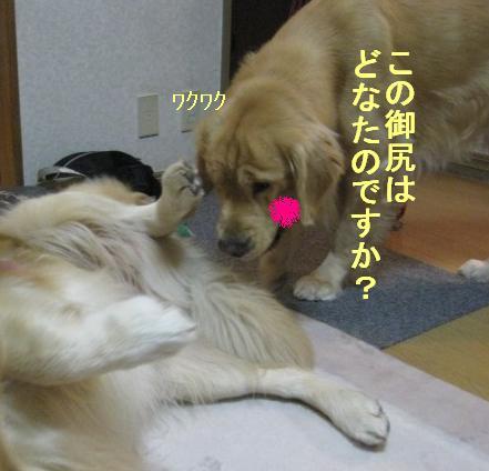 misatoIMG_2956.jpg