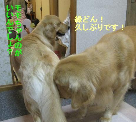 misatoIMG_2963_20090815095513.jpg