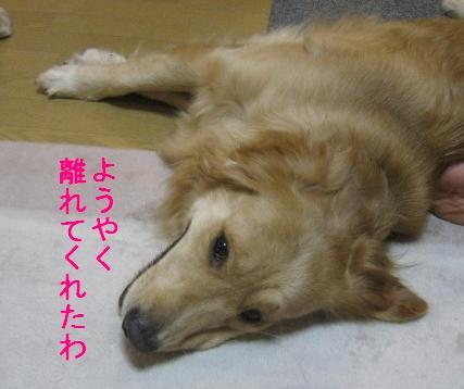 misatoIMG_2964.jpg
