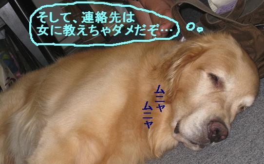 misatoIMG_296783.jpg