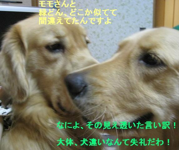 misatoIMG_2969.jpg