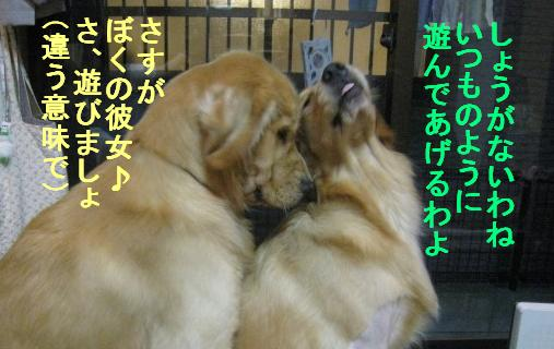 misatoIMG_2970.jpg