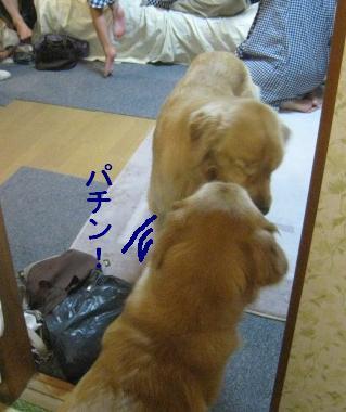 misatoIMG_2990.jpg