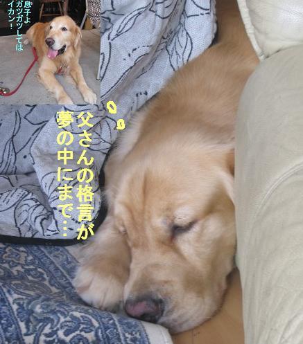 misatoIMG_3001_20090815092927.jpg