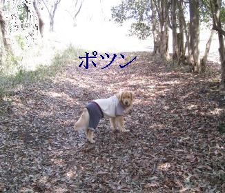 ooike_IMG_2049.jpg