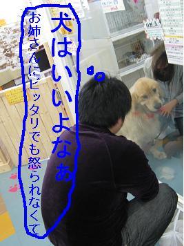 tiala_html_2d080bbd.jpg