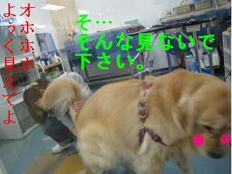 tiala_html_7070d1cb.jpg