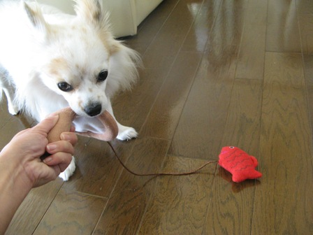 金魚のおもちゃ2.