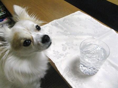 焼酎。うまい水?