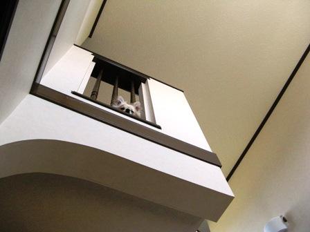 階段の上から・・・2。