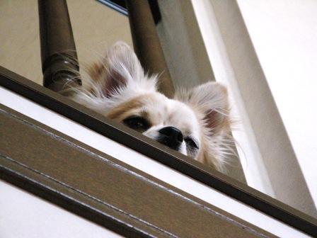 階段の上から・・・。