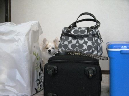 荷物の中に。