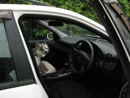 さようならプー兄たんから受け継いだお車。