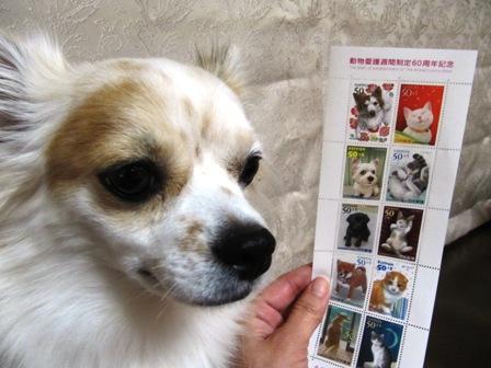 動物愛護記念切手と利久。