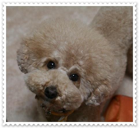 犬泉Riku