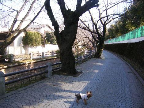 2008_02250006.jpg