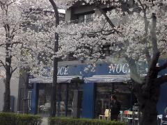 0402sakura1.jpg
