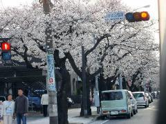 0402sakura2.jpg
