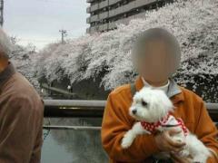 0404sakura4.jpg