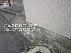 20070121170247.jpg